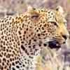 Kruger1