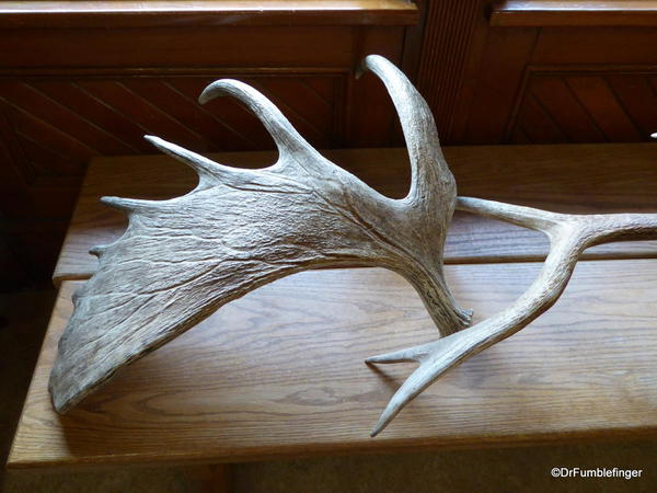 Banff Park Museum, Library. Moose antler