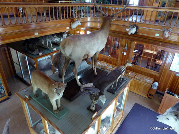 Banff Park Museum, Upstairs