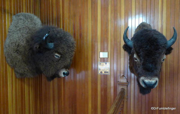 Banff Park Museum, Upstairs (bison)