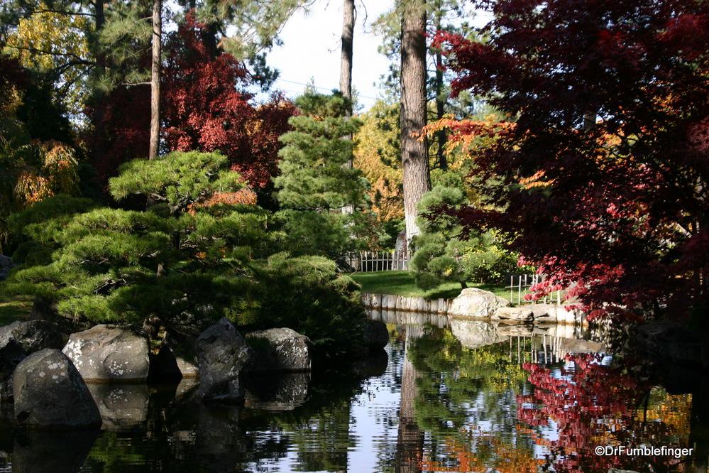 The nishinomiya tsutakawa japanese garden in autumn for Nishinomiya tsutakawa japanese garden koi