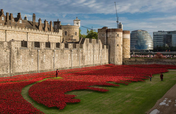 tower bridge poppies