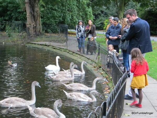 St. Stephen's Green, Dublin. Feeding the Swans