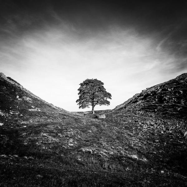 Sycamore Gap. Hadrian's Wall. England