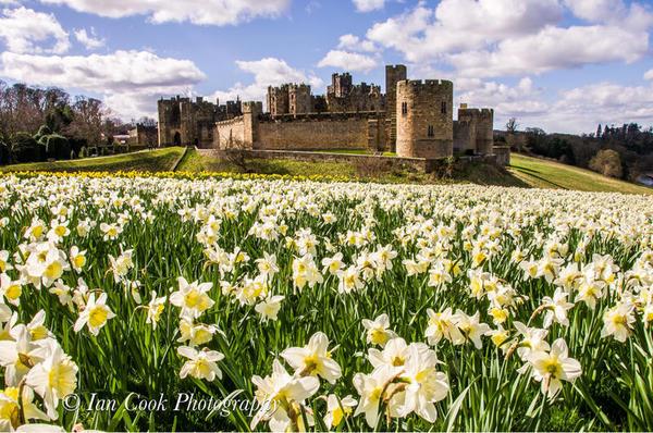 Photo 03-11-2015, 14 15 07 Alnwick Castle in the spring