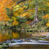 Gorge of the River Allen, Northumberland