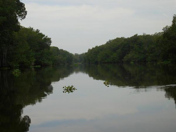 03 2015-11 Guatemala Mangroves 15