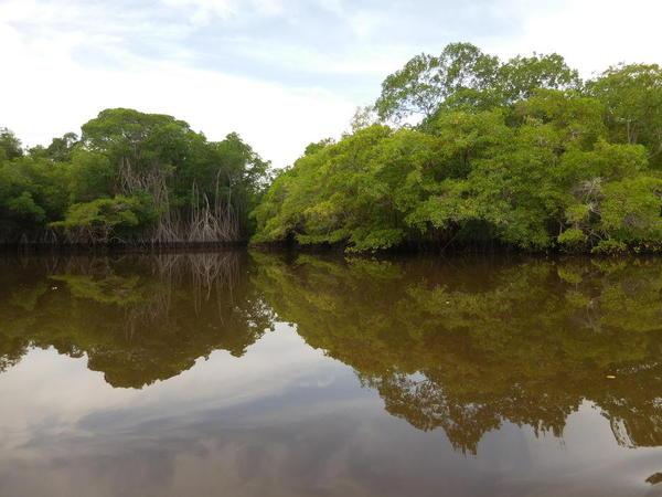 04 2015-11 Guatemala Mangroves 28
