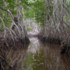 07 2015-11 Guatemala Mangroves 49: Reflected trees -- getting lost in the woods