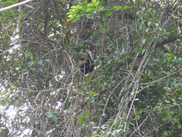12 2015-11 Guatemala Tikal 009