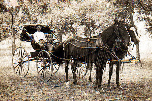 tmp_22988-500px-Horse_and_buggy_1910571869090