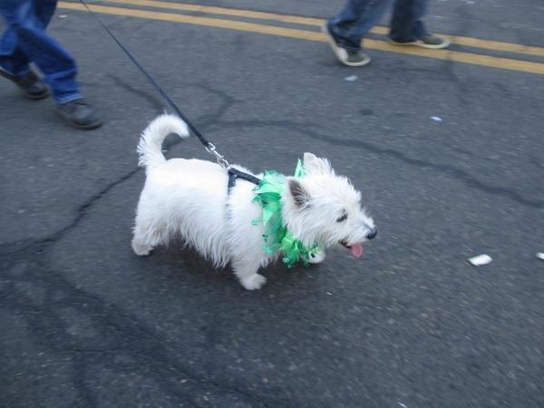 St. Patricks Day - Dog