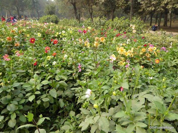08 Lodhi Gardens, Delhi 02-2016 (12)