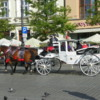 Horse Carriage Ride: Main Square, Krakow, Poland