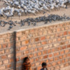 Children watching the bird watchers at the Demoiselle feeding area in Khichan.
