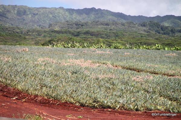 Dole Plantation 10-2014 (6c)