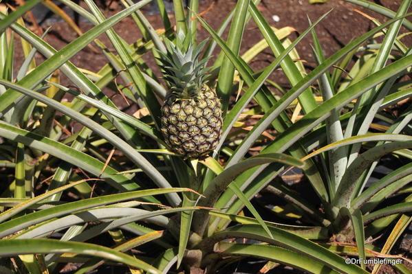 Dole Plantation 10-2014 (13a)