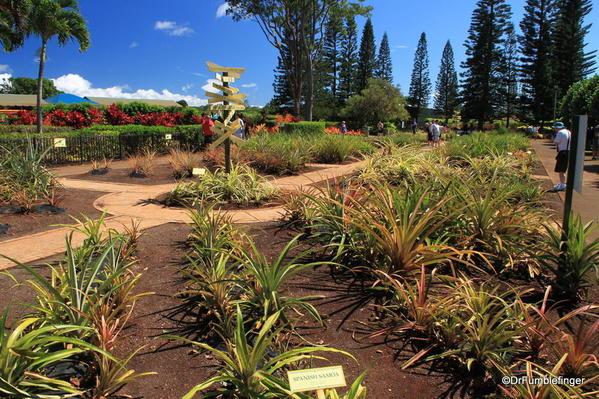 Dole Plantation 10-2014 (34)