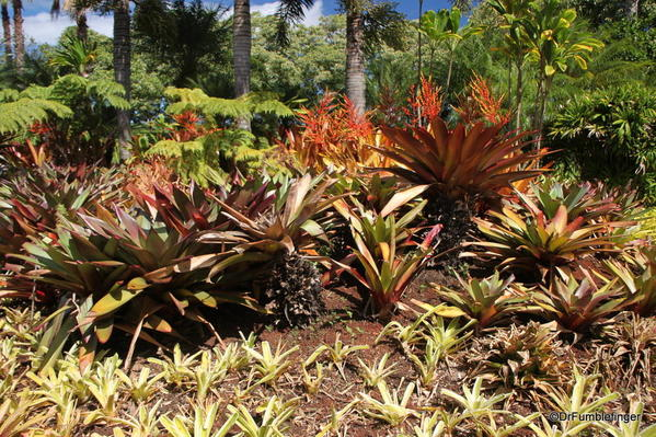 Dole Plantation 10-2014 (48)