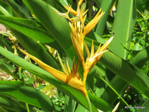 Dole Plantation 10-2014 (63a)