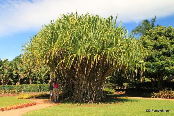 Dole Plantation 10-2014 (73)