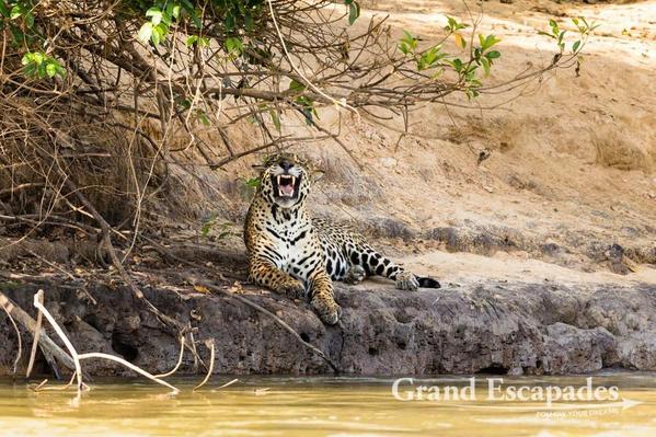 Pantanal-102