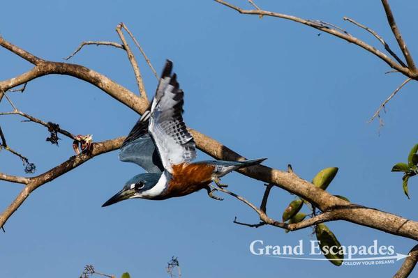 Pantanal-103