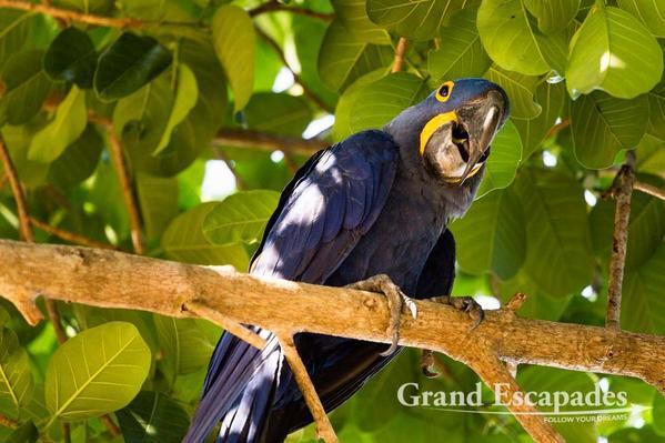 Pantanal-104
