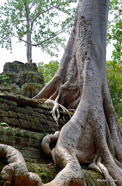 Siem Reap 91