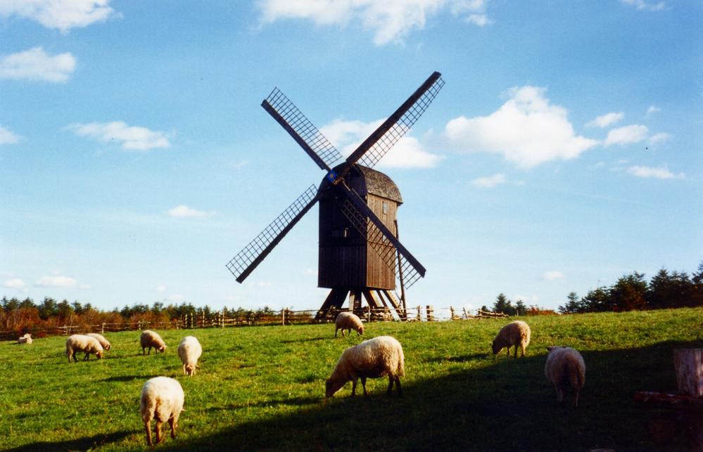 Heaths of Randbøl Hede and Frederikshåb Plantation