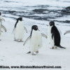 Antarctica_seal_attack-b