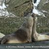 Antarctica_weaner-5