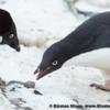 Antarctica_rocks