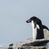 Antarctica_rocks-3