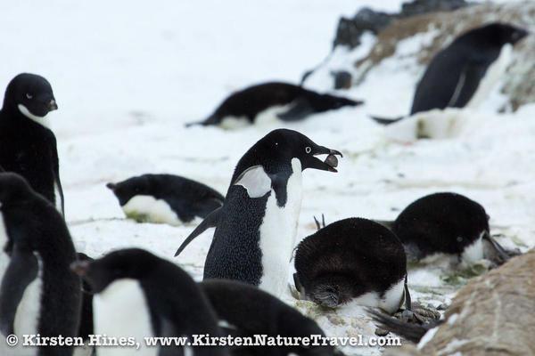 Antarctica_rocks-4