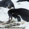 Antarctica_rocks-5