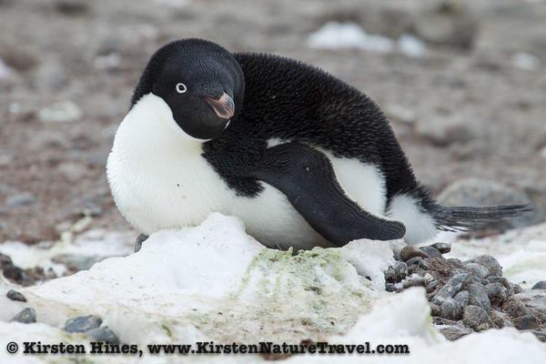 Antarctica_rocks-6