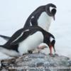 Antarctica_rocks-7