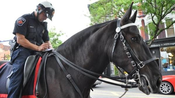 Percheron-police-horse