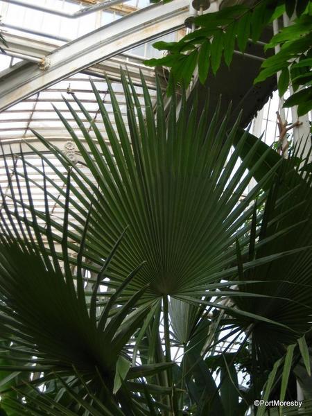 Kew11