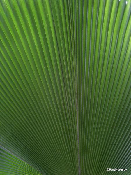 Kew13