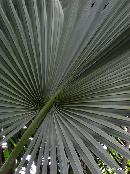 Kew14