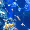 aotp-Fish2