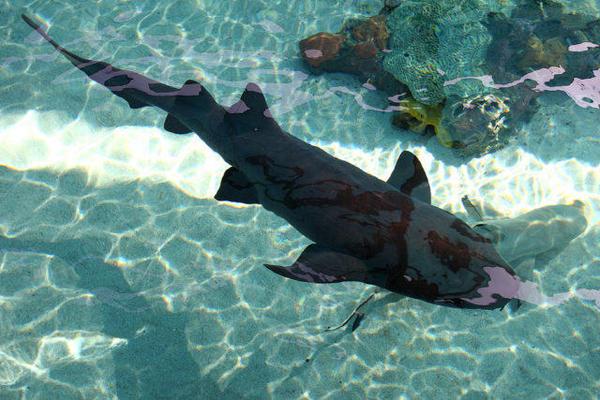 Shark-Lagoon1