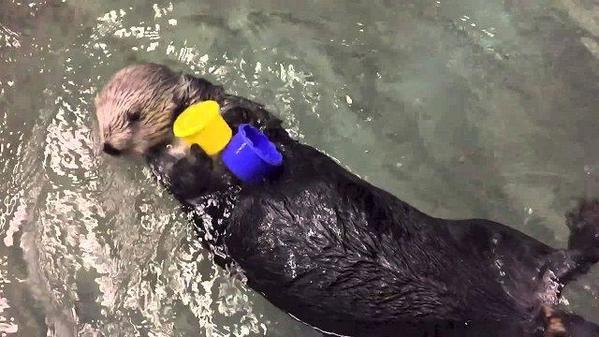 Sea-Otter-2