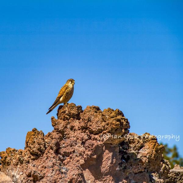 Journey to the top of Mount Teide 6