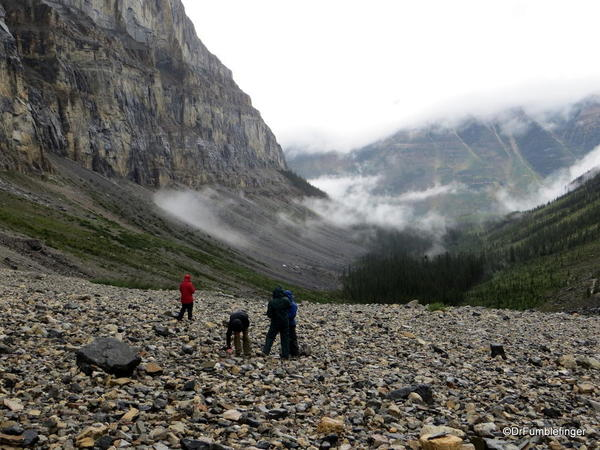 04. Stanley Glacier valley. Looking for fossils (10)