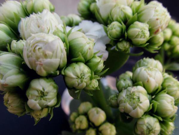 psiri-table-flowers