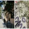 street-and-olive-tree-psiri