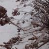 April 26, 2017: Ice Storm, Thunder Bay, Ontario